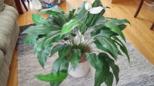 Artificial Plant ** Good condition