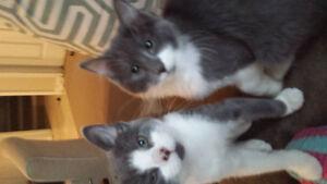 Sweet kittens!