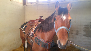 Mare for sale!