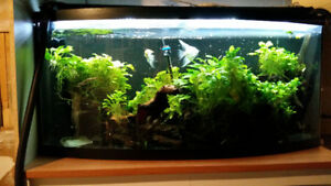 Complete Aquarium for Sale 72 Gallon Bowfront