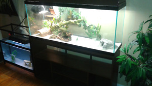 Reptile tank with accessories $ 300