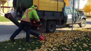 Fall / Leaf / Yard cleanup / Eavestrough Cleaning Kitchener / Waterloo Kitchener Area image 6