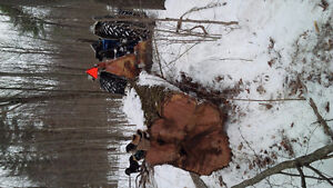 Firewood for sale. Mixed hardwood, Delivery available Kingston Kingston Area image 2
