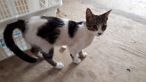 ***two female kittens to good home *** Cornwall Ontario image 2