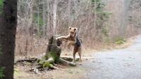 Dog Walker Penhorn Mall / Evergreen Condo Area in Dartmouth
