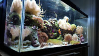 All Coral Live Rock and Fish Must Go!!