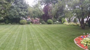 Summer Property Maintenance-lawn care, window cleaning
