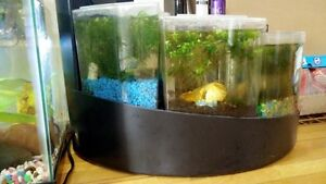 Two fish tank for sale!