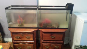 2 stands and fish tanks
