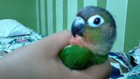 Parrot Sitter :) We Care