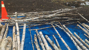Birch branches or logs for crafting London Ontario image 3