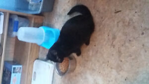 Free older kitten looking for good home