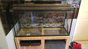 Complete set up with 2 Tanks 75g &10g Windsor Region Ontario image 3