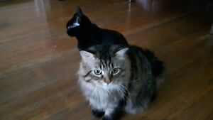 2 Great Cats - I Can't Keep Them! (Allergies)
