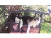 waterproof all weather outdoor bitumen roof double storey cat play house/shelter from wind/rain/snow