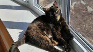Missing Cat in Heritage Park Area of Kitchener