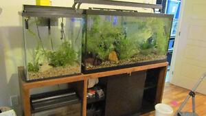kit de 4 aquariums vendu seulement ensemble Saguenay Saguenay-Lac-Saint-Jean image 6