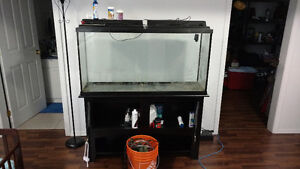 60 Gal Fresh Water Aquarium