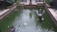 Professional Pond Care and Matinence