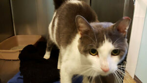 FREE Street Cat in Need of Loving Home - Neutered/Vaccinated