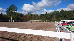 Horse services- Board, training, lessons, therapy