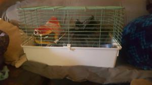 Cage a lapin et autres rongeurs