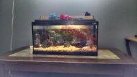 Full set up 20 g aquarium