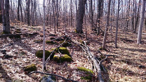 65 acres of beautiful hunting property