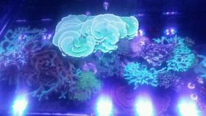Sps frags for sale!