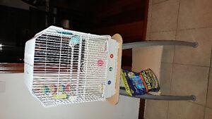 Une perruche avec cage et table