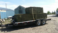 Excellent Quality Horse or Cattle Hay