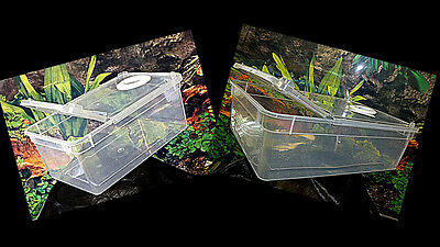Vented Invertebrate /Spider Boxes,Two Sizes & Vent Options Availible