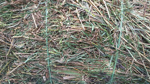 Organic Grassy Hay TUESDAY PICK UP ONLY