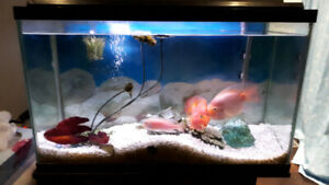 29 gal tank with fish $200
