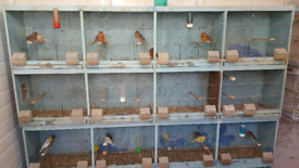 Breeding cages