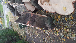 Maple Wood stump coffee table West Island Greater Montréal image 2
