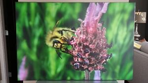 Professionally Mounted Bee Photographs