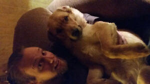 LOST DOG BRIDGEWATER 02 15 17