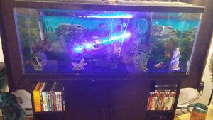 Aquarium 55 gallon  + meuble