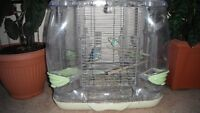 Selling two budgies with birdcages or change a pare Finch