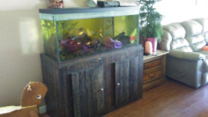 Fish tank, stand, filter, fish included