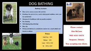 Do it yourself dog wash adopt or rehome pets in ontario kijiji dog bathing solutioingenieria Image collections
