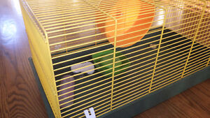 Cage hamsters