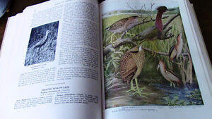 Birds of America, 1917, 1936, 106 Full Color Plates Kitchener / Waterloo Kitchener Area image 3