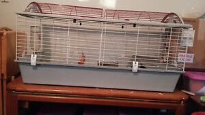 2 female guinea pigs Peterborough Peterborough Area image 3