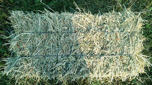 Green feed oat hay for sale