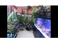 Looking tropical and marine fish for good home