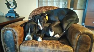 (On hold) Bella and Chanelle are looking for a loving home Gatineau Ottawa / Gatineau Area image 2