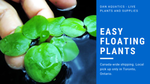 Salvinia, Amazon Frogbit, Giant Duckweed, Blue/Red Ramshorns!