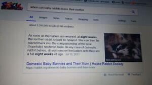 big NO to selling  bunnies under 8 weeks old